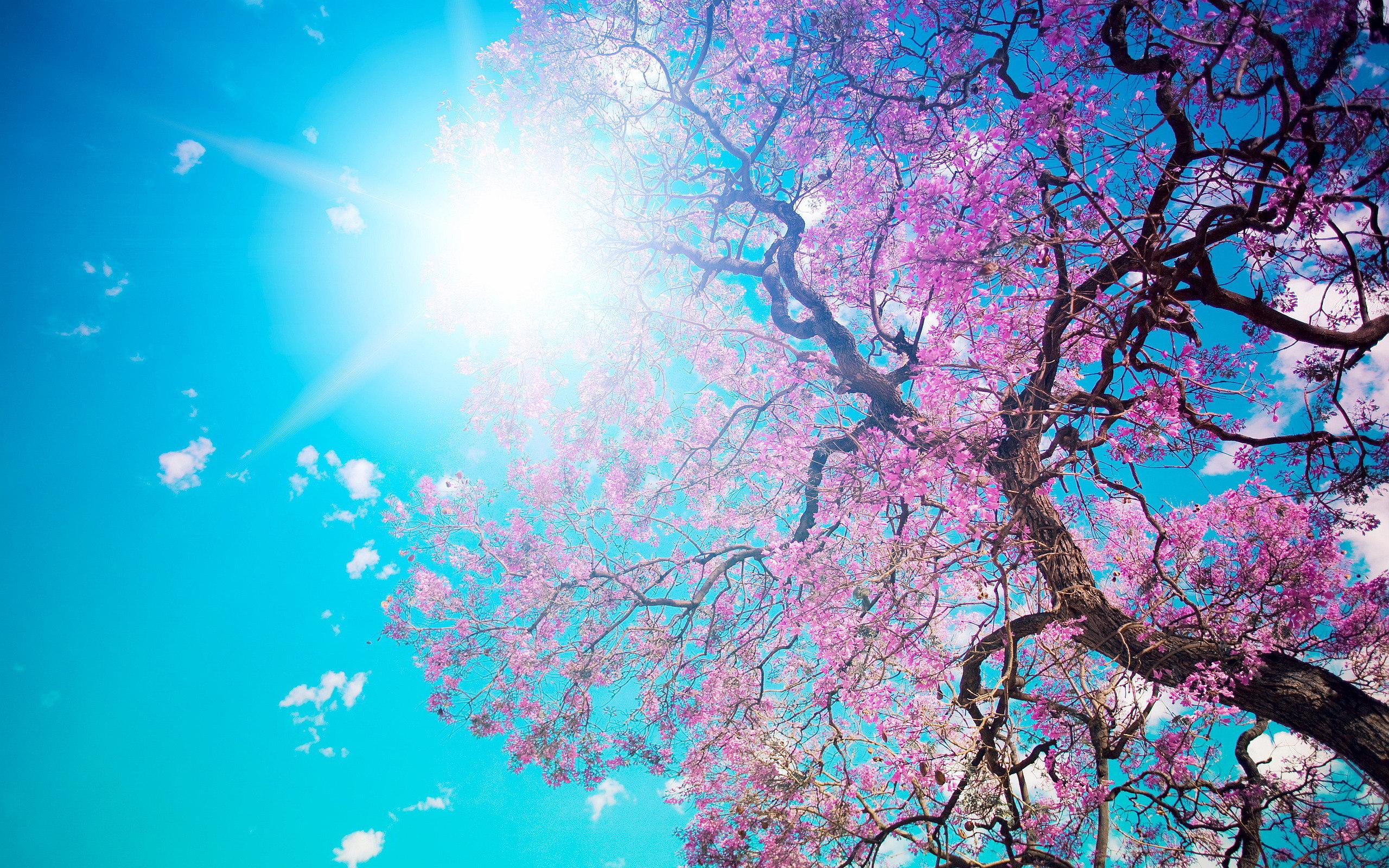Tavasz, napsütés