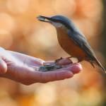 Beszélgessünk a pécsi madarakkal!