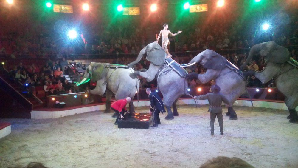magyar cirkusz
