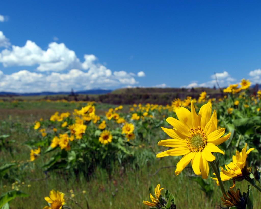 nyár, kirándulás, ökoturizmus, virágos rét