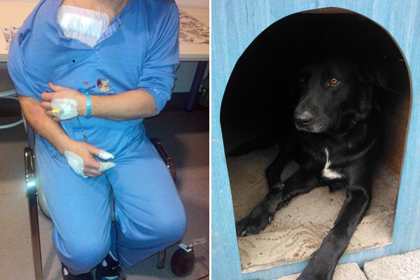 Összesen hét sebet ejtettek az áldozaton, aki a kutyájának köszönheti az életét (Olvasói fotó)