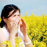Nőtt a parlagfű pollenkoncentrációja