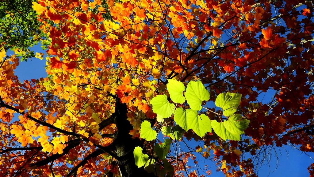 őszi színek, táj, fa, falevelek