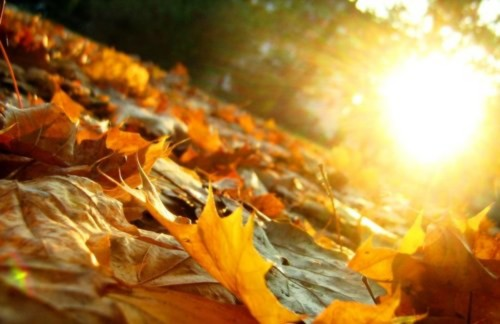 őszi napsütés - jo
