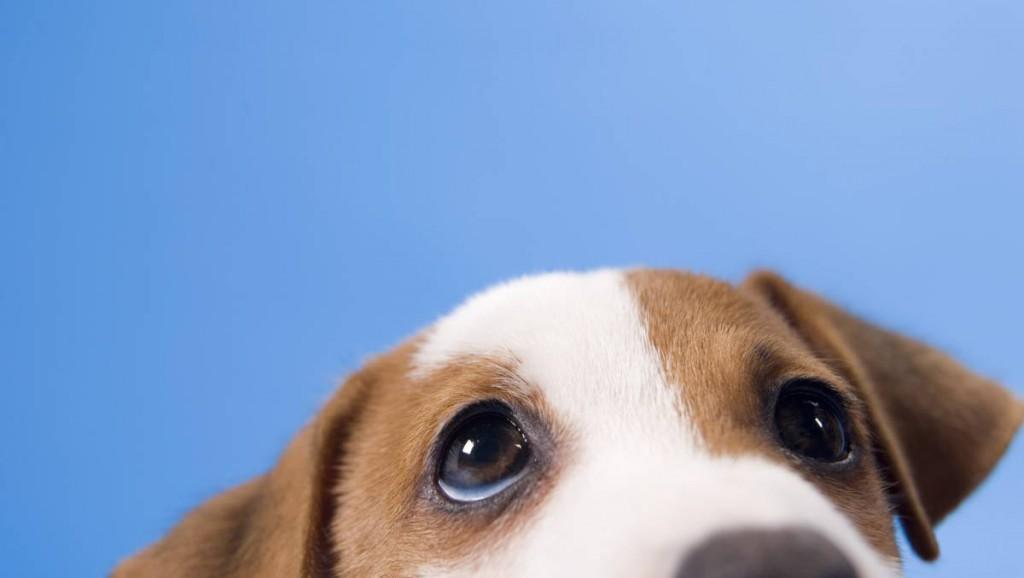 Kutya, eb