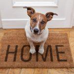 Számít-e a gazdi neme, ha a kutya neveléséről van szó?