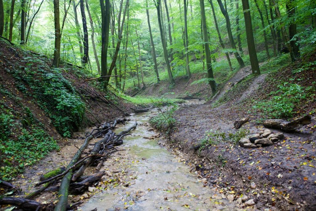 Mecsek, erdő, kirándulás