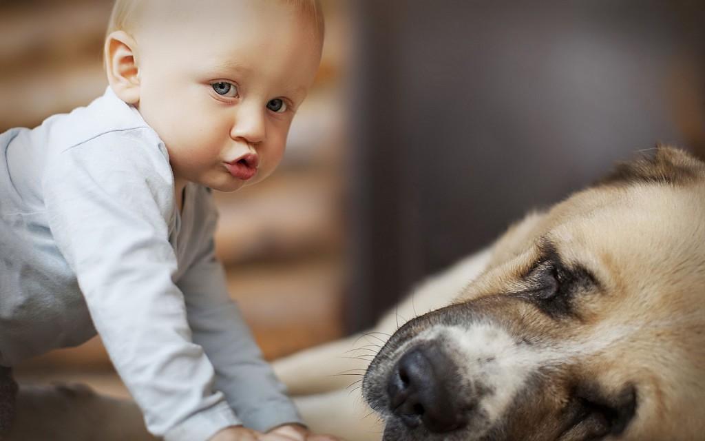 kutya, gyerek, eb, háziállat