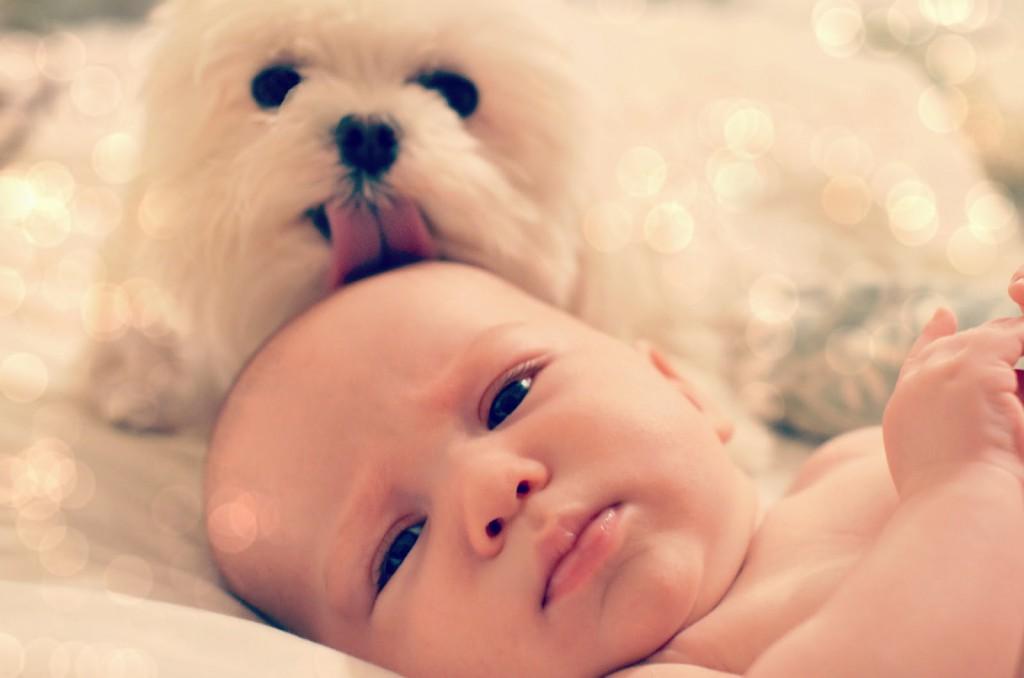 csecsemő, bébi, kutya