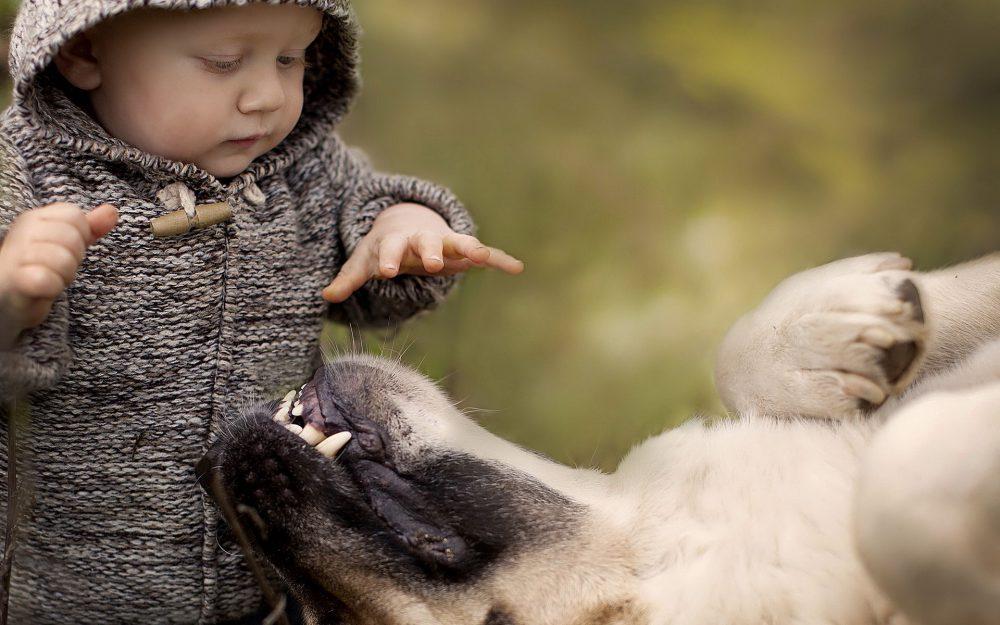 kutya, csecsemő, bébi, gyerek, háziállat