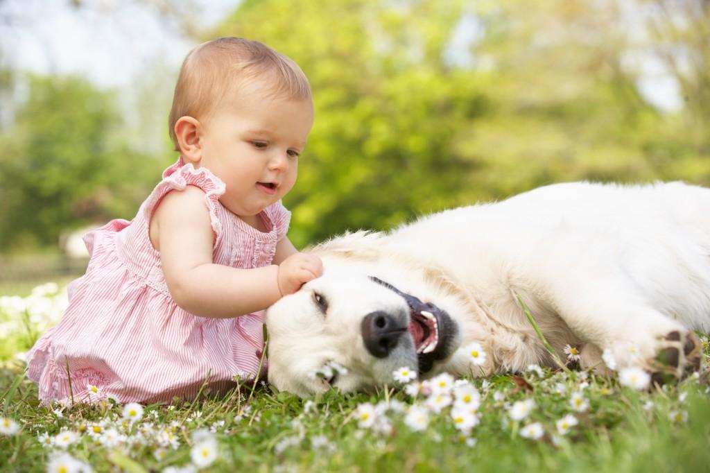 Gyerek és kutya
