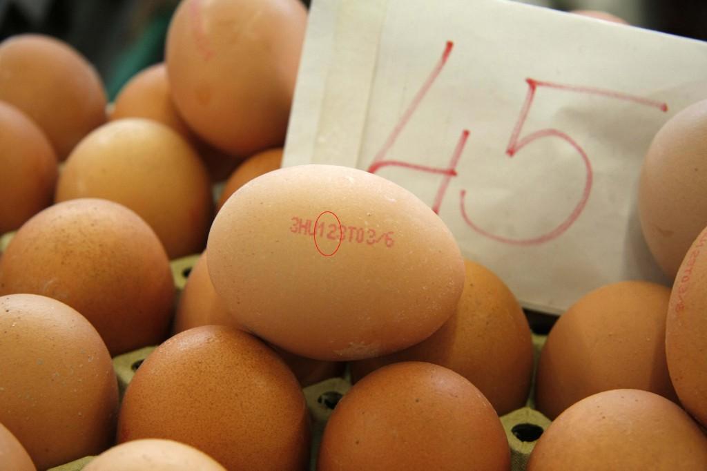 tojás sonak (5)