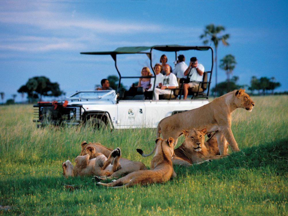 Így lehet a legvagányabb oroszlánt látni