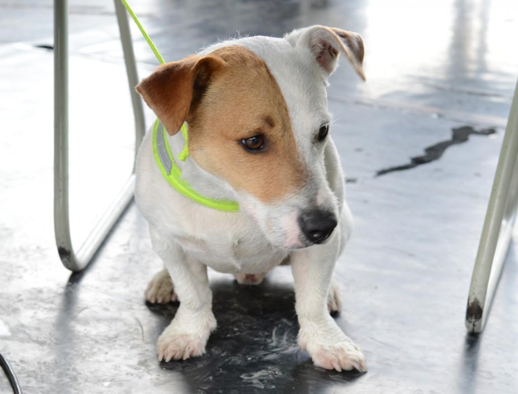 pecsmapresszo-kutyák08