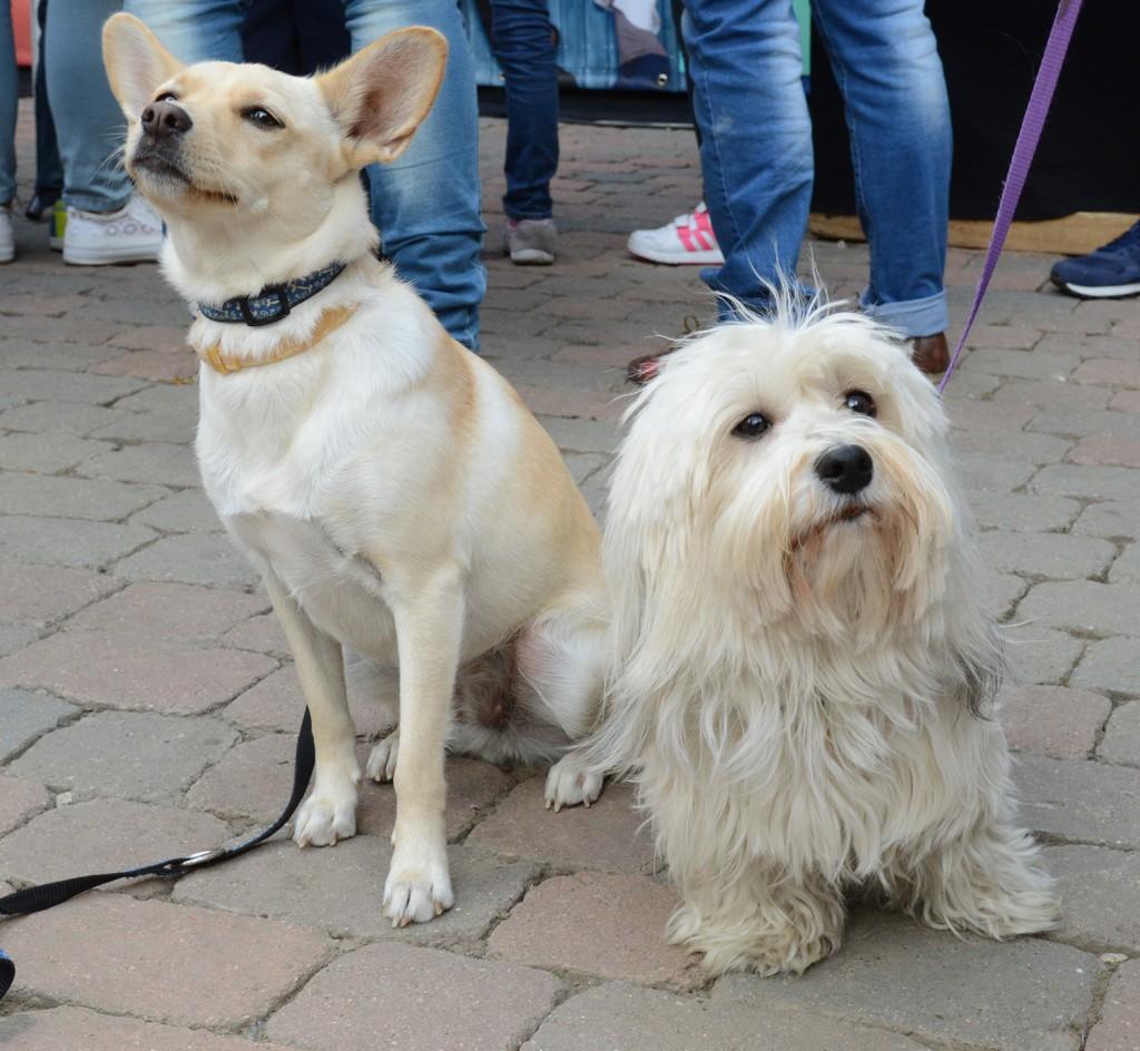 pecsmapresszo-kutyák15