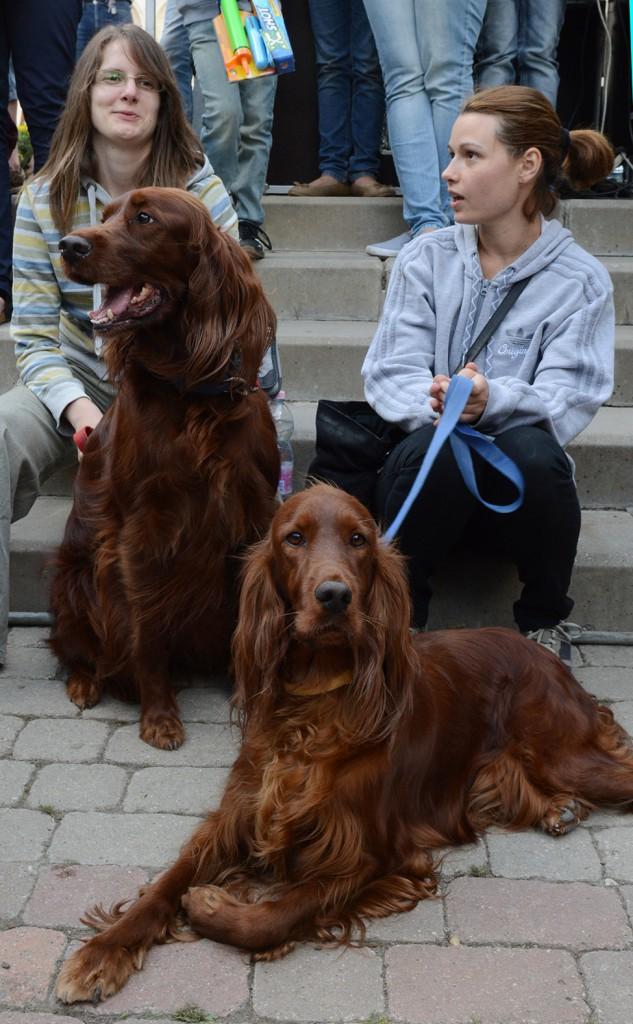 pecsmapresszo-kutyák17
