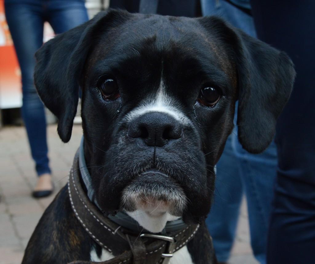 pecsmapresszo-kutyák18