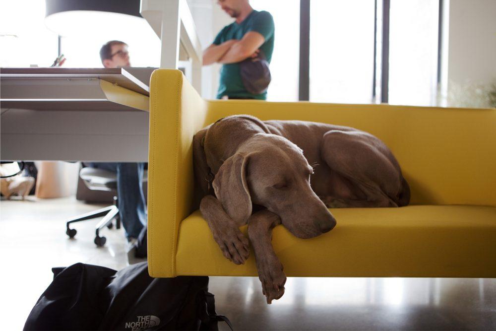 Kutya az irodában 2
