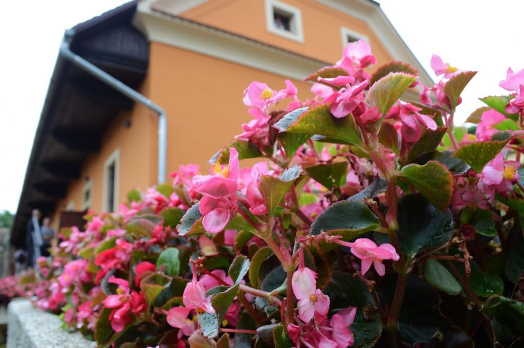 virág ház8