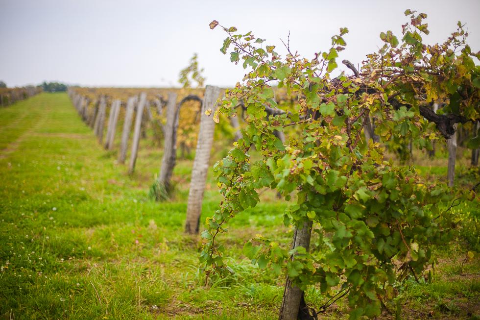 Belward pincészet, borászat bor (1)
