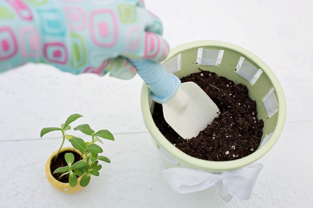 ültetés, növény, kertészkedés