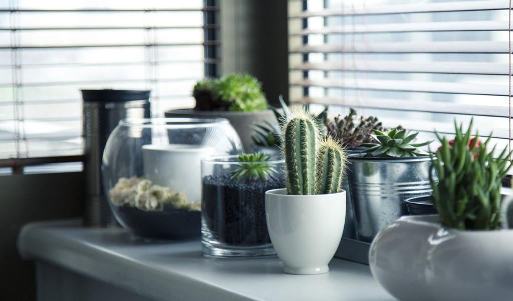 növény, kaktusz