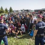 Kőhalmi: Mozgó bűnözést hozott a migráció
