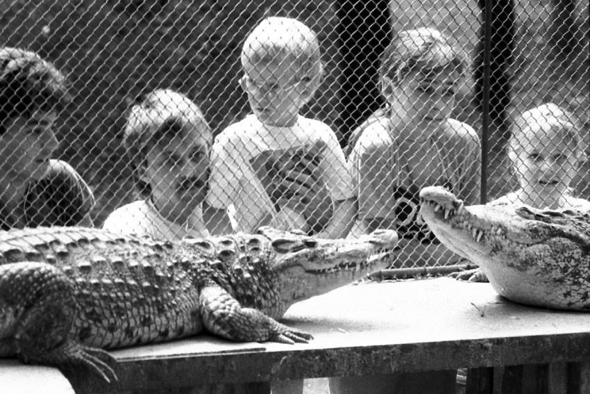 A krokodilok közönségkedvencek lettek