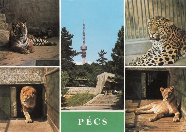 Az állatkert még képeslapokra is felkerült