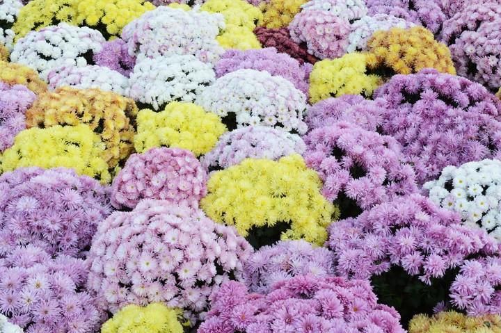 virágvásár a kossuth téren, hl01