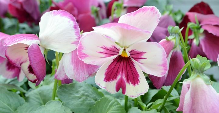 virágvásár a kossuth téren, hl04