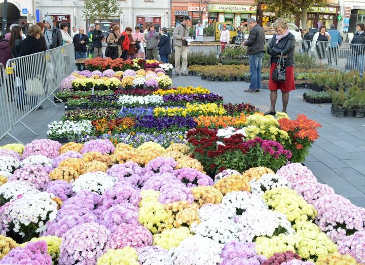 virágvásár a kossuth téren,hl03