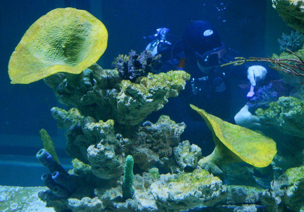 Tesztelik az akváriumokat