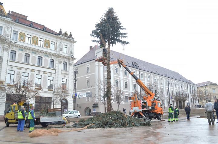 karácsonyfa bontás, hl10