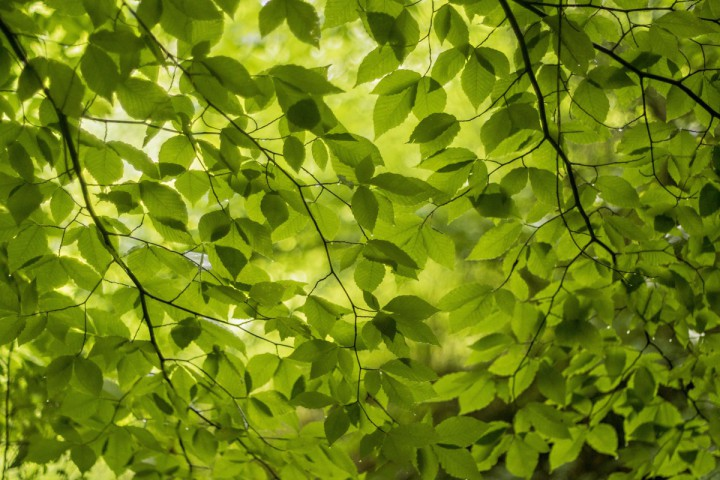 387092-spring-green-leaves