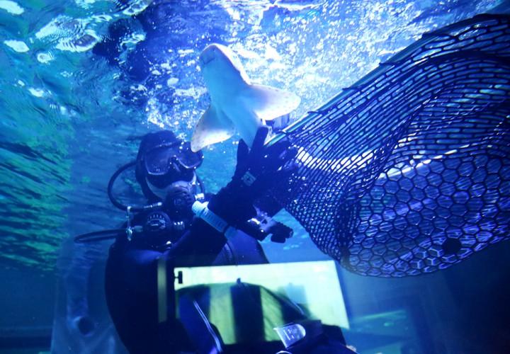 cápa újra, hl01