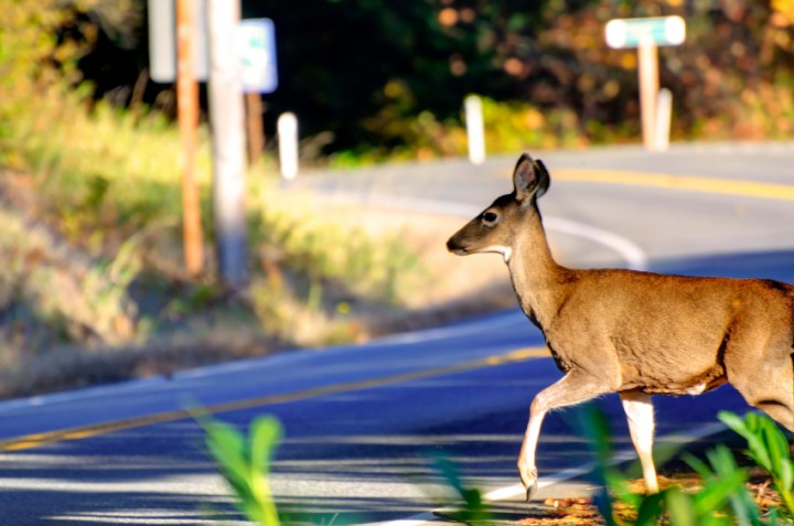 car-insurance-deer-season