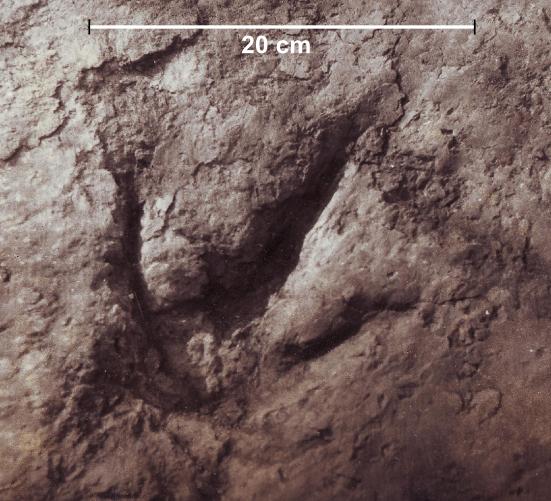A Komlosaurus lábnyomának nyomában