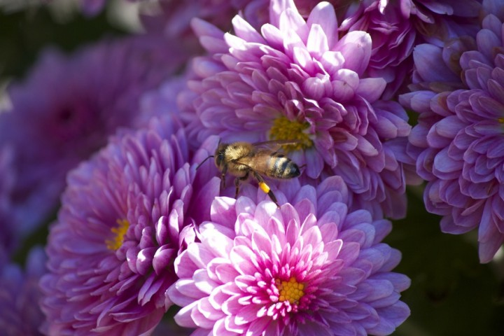 flowers-summer-bee-large