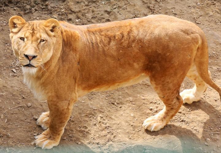 állatkert, hl19
