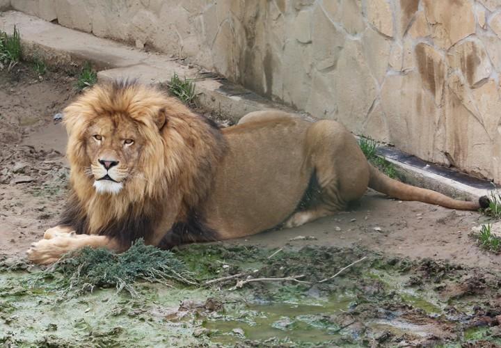 állatkert, hl20