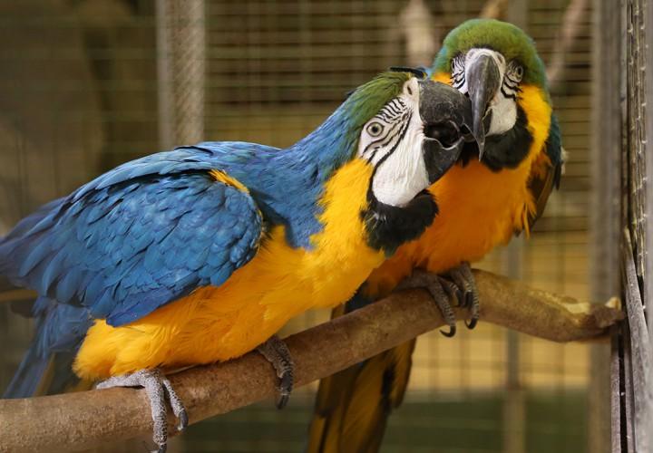 állatkert, hl22