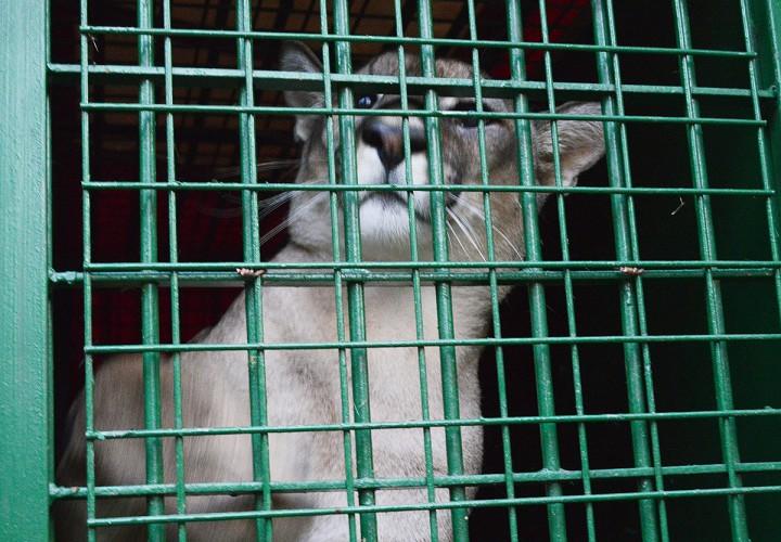 állatkert, hl5