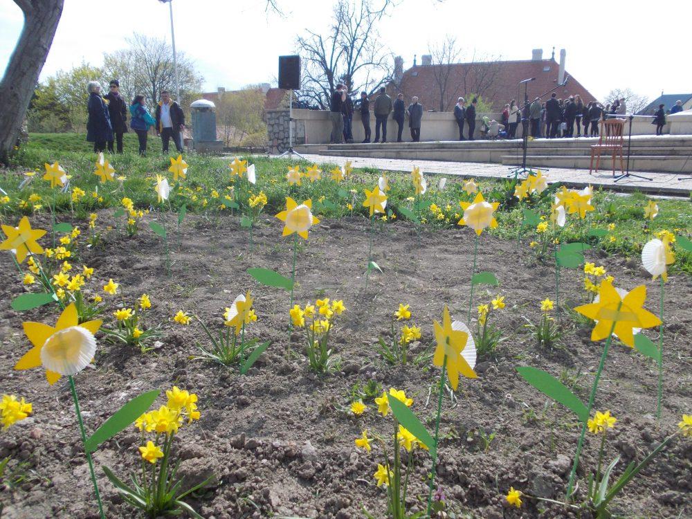 Kibújtak a nárciszok az ünnepségre
