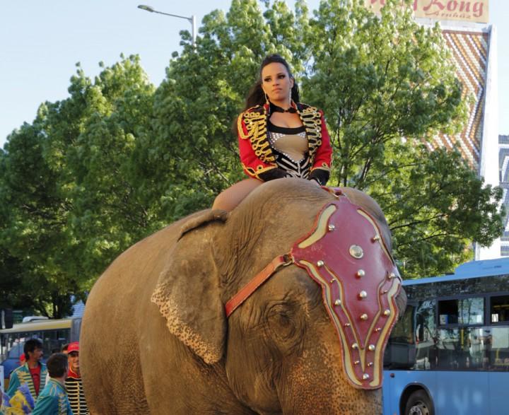 cirkuszi felvonulás (6)