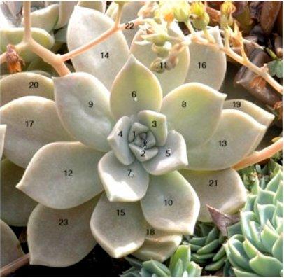 fibonacci_plant