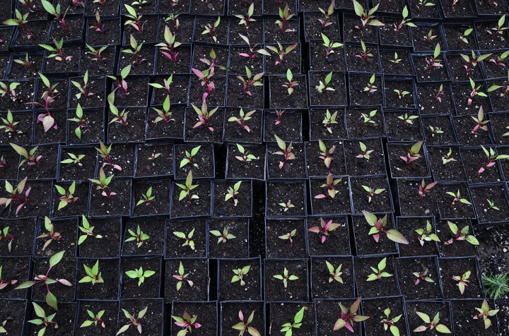 kertvárosi virágosítás, csizi peti, hl03