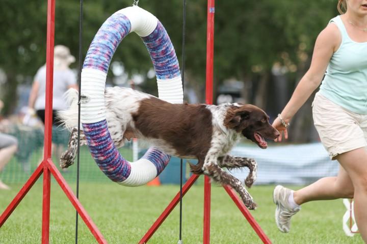 kutya_training_2