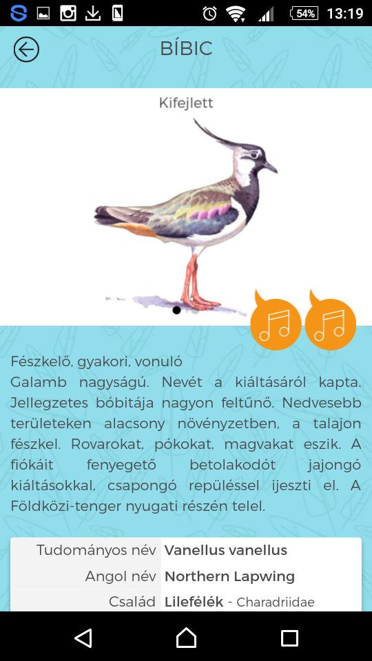 Minden, amit tudni akartunk a hazai madarakról, és több