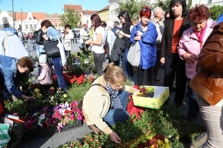 virágvásár, galéria5